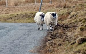 Skye road trip