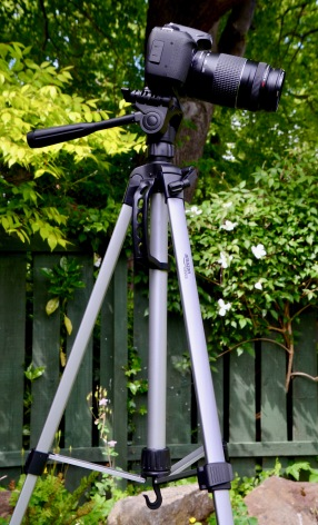 Amazon Basics light weight tripod.